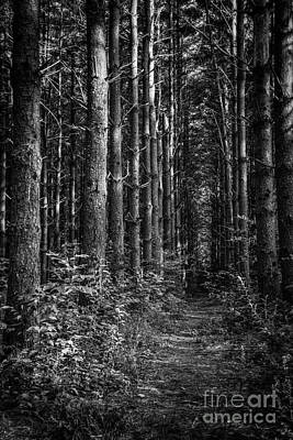 Photograph - Pisgah Forest Trail by David Waldrop