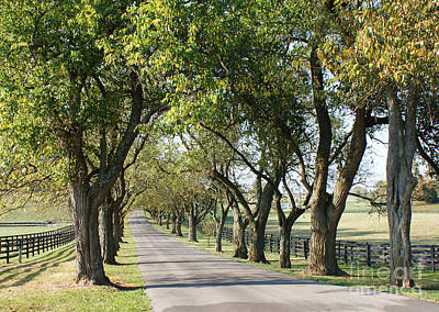Keeneland Photograph - Pisgah Pike by Roger Potts