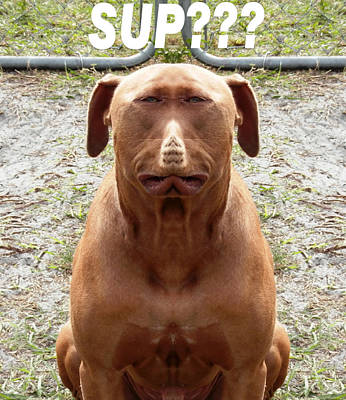 Photograph - Pit Bull Double  by Belinda Lee