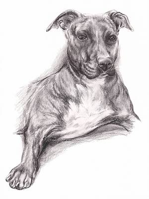 Drawing - Pit Bull Portrait In Charcoal by MM Anderson