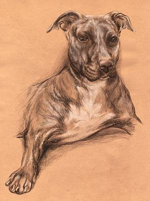 Drawing - Pit Bull Portrait - Tea Dyed Charcoal by MM Anderson