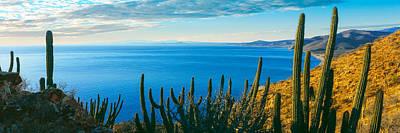 Pitaya And Cardon Cactus On Coast Art Print