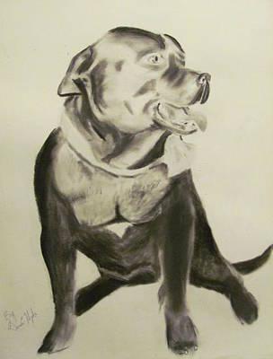 Pitbull Drawing - Pitbull by Gina Hyde