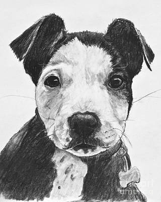 Pitbull Drawing - Pitbull Puppy Black And White by Kate Sumners