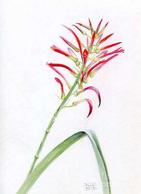 Painting - Pitcairnia Flammea by Penrith Goff