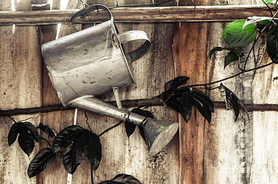 Photograph - Pitcher At The Coffee Plantation by Bianca Nadeau