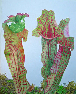 Pitcher Plants Drawing - Pitcher Plant - Sarracenia by Rita Omark
