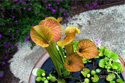 Pitcher Plants Art Print