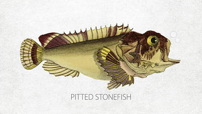 Saltwater Fishing Drawing - Pitted Stonefish by Aged Pixel
