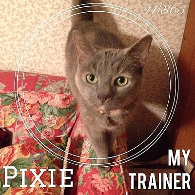 Sweet Wall Art - Photograph - #pixie Is My Official #trainer While I by Teresa Mucha