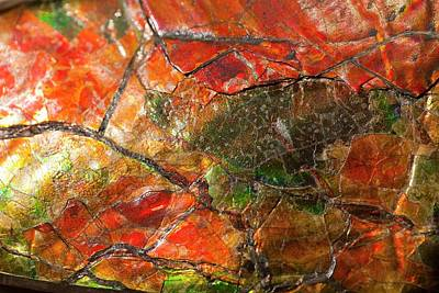 Iridescence Photograph - Placenticeras Ammonite Ammolite Gemstone by Paul D Stewart