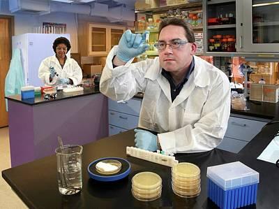 Black Death Photograph - Plague Bacteria Detection Research by Paul Pierlott/us Department Of Agriculture