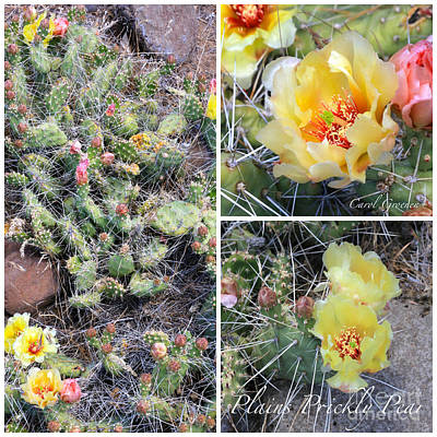 Photograph - Plains Prickly Pear Collage by Carol Groenen