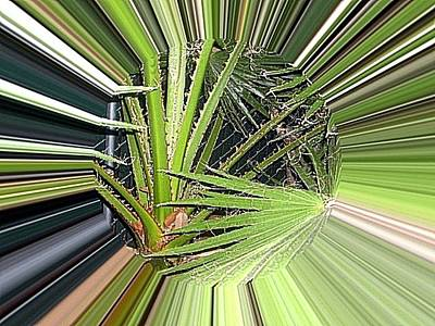 Etc. Digital Art - Plam Tree by HollyWood Creation By linda zanini