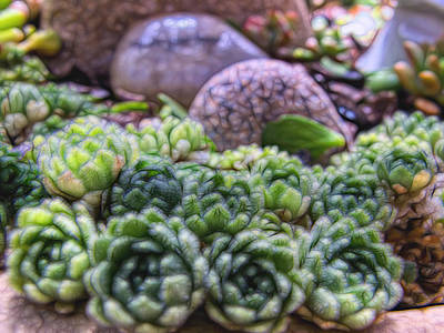Photograph - Plant 54 by Dawn Eshelman