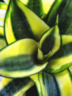 Photograph - Plant 56 by Dawn Eshelman