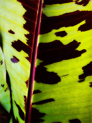 Photograph - Plant 58 by Dawn Eshelman