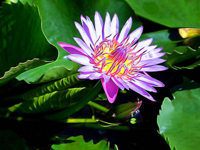 Photograph - Plant 60 by Dawn Eshelman