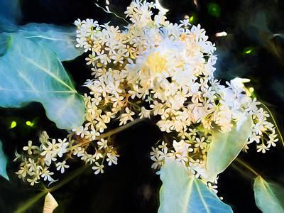 Photograph - Plant 63 by Dawn Eshelman