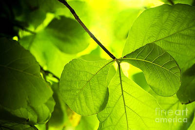 Royalty-Free and Rights-Managed Images - Plant Background by Tim Hester