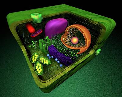 Plant Cell Art Print by Sci-comm Studios