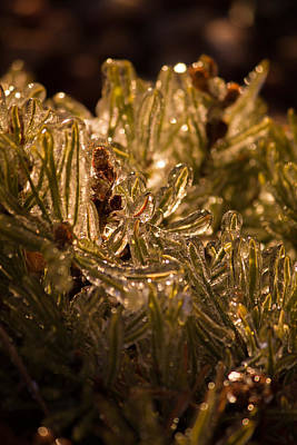 Art Print featuring the photograph Plant Covered In Ice by Dave Garner