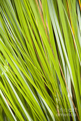 Royalty-Free and Rights-Managed Images - Plant Details by Tim Hester
