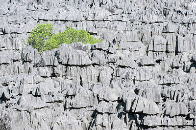 Strict Photograph - Plant Growing On Limestone Rocks by Dr P. Marazzi