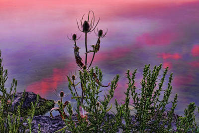 Plant Life By The Water Art Print