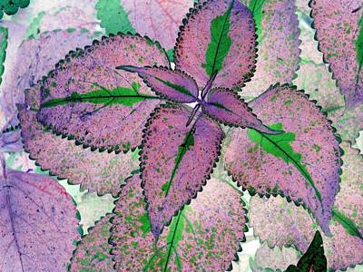 Photograph - Plant Pattern - Photopower 1211 by Pamela Critchlow