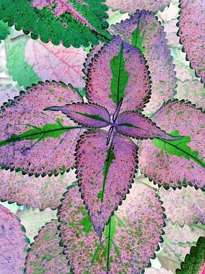 Photograph - Plant Pattern - Photopower 1212 by Pamela Critchlow