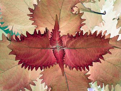 Photograph - Plant Pattern - Photopower 1567 by Pamela Critchlow