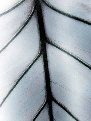 Photograph - Plant Pattern - Photopower 1829 by Pamela Critchlow