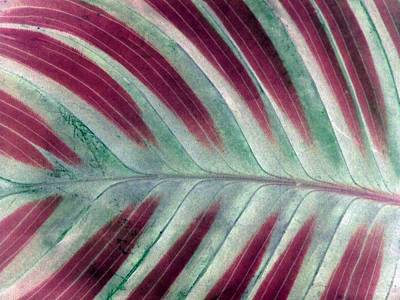 Photograph - Plant Pattern - Photopower 1830 by Pamela Critchlow