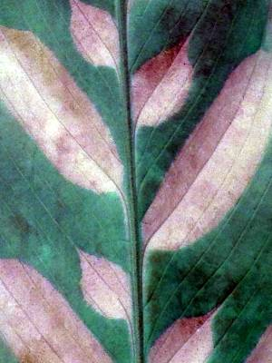 Photograph - Plant Pattern - Photopower 1831 by Pamela Critchlow
