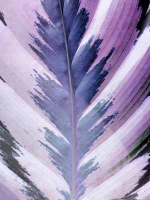 Photograph - Plant Pattern - Photopower 1833 by Pamela Critchlow