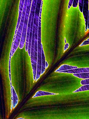 Photograph - Plant Pattern - Photopower 1848 by Pamela Critchlow