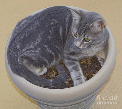 Photograph - Plant Pot Cat by Donna L Munro