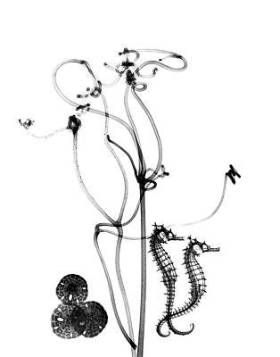 Plant Tendrils And Seahorses Art Print by Albert Koetsier X-ray