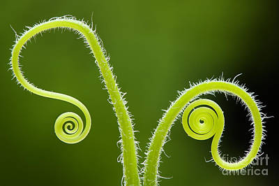 Plant Tendrils Art Print by Tim Gainey
