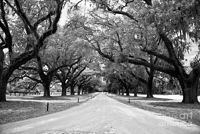 Photograph - Plantation Road by John Rizzuto