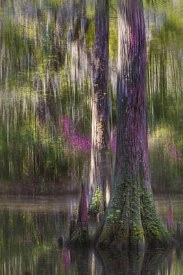 Plantation Swamp Original