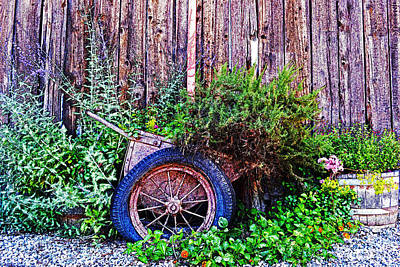 Photograph - Planted Wheel by Holly Blunkall