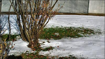 Photograph - Plantgrasscomp 2009 by Glenn Bautista