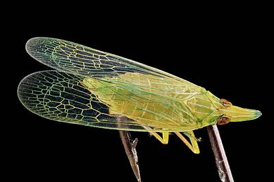 Planthopper Art Print by Us Geological Survey