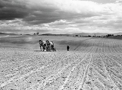 Horse-drawn Plow Photograph - Planting Corn, 1941 by Granger