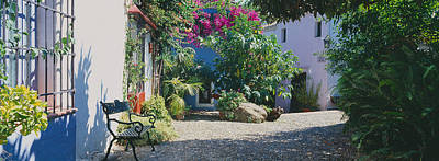 Plants At A House, Marbella, Costa Del Art Print by Panoramic Images