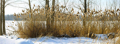 Richelieu Photograph - Plants In A Snow Covered Field by Panoramic Images