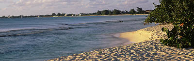 Plants On The Beach, Seven Mile Beach Art Print by Panoramic Images