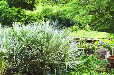 Photograph - Plants-prehistoric Austin Botanical Garden - Luther Fine Art by Luther Fine Art
